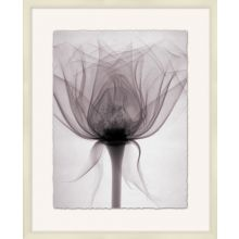 X-Ray Floral 4  25.75W X 31.75H