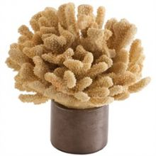 Malaya Coral Sculpture - Cleared Décor