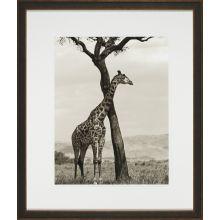Shaded Giraffe 22W x 26H