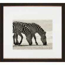 Grazing Zebras  22W x 20H
