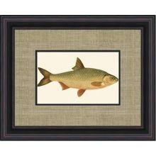Small Antique Fish VI 21W x 17H