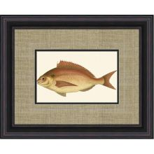 Small Antique Fish III 21W x 17H