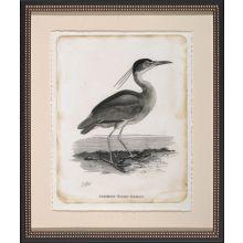 Common Night Heron 22W x 26H