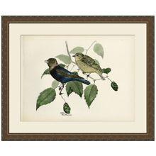 Large Brasher Bird IV 41.5W x 34.5H