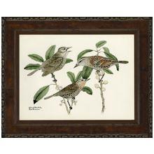 Small Brasher Birds III 21W x 17H