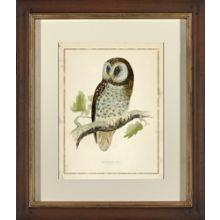 Tengmalms Owl I 25W x 29H