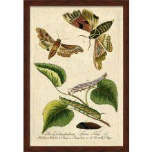 Moth Grande 38W x 54.5H