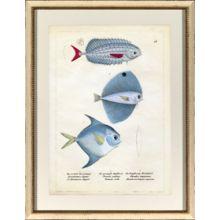 Blue Fish I 22.5W x 28.75H