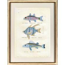 Blue Fish II 22.5W x 28.75H