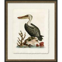 Medium Pelican 22W x 26H