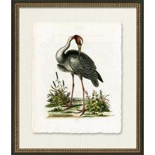 Medium Indian Crane 22W x 26H