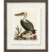 Pelican 33W x 39H