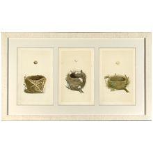Morris Bird Nests II 43.5W x 26H