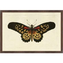 Naturalists Moth VI 26W x 18H