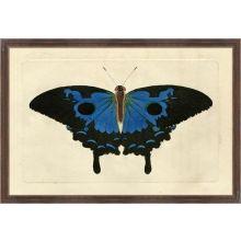 Naturalists Moth VIII 26W x 18H