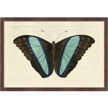 Naturalists Moth I 26W x 18H