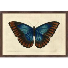 Naturalists Moth II 26W x 18H