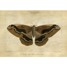Crackled Canvas Moth I 33W x 24H