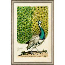 Peacock II 36W x 54H