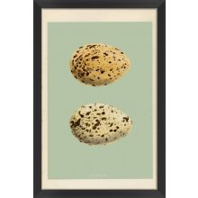 Classic Egg Study I (Set of 3) 16W x 24H