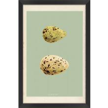 Classic Egg Study II (Set of 3) 16W x 24H