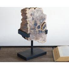 White Petrified Wood Slice