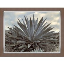 Giant Agave 20W X 16H
