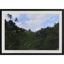 Rice Terraces 28W x 20H