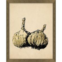 Sketched Garlic 12W X 15H