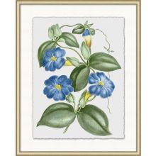 Floral Study 1 20W x 25H