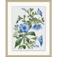 Floral Study 2 20W x 25H