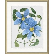 Floral Study 6 20W x 25H
