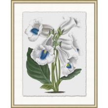 Floral Study 7 20W x 25H