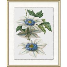 Floral Study 8 20W x 25H